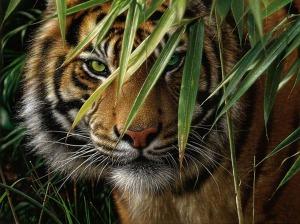 tiger-emerald-forest-koyeq_085123