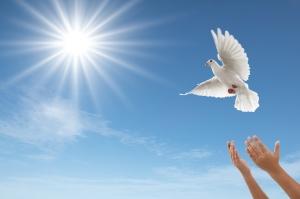 releasing dove